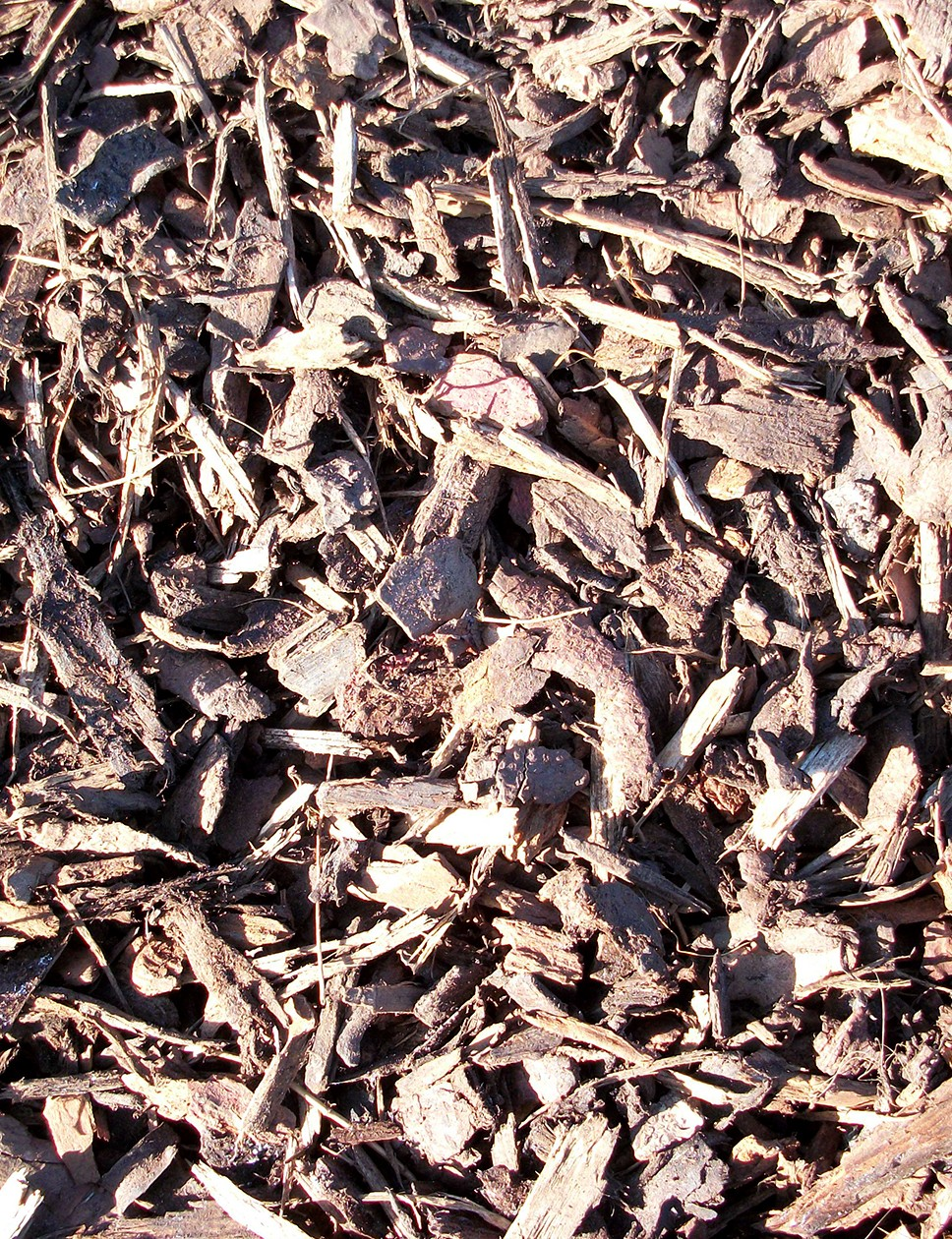 Decorative bark